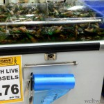 Green Lipped Mussels in Tank