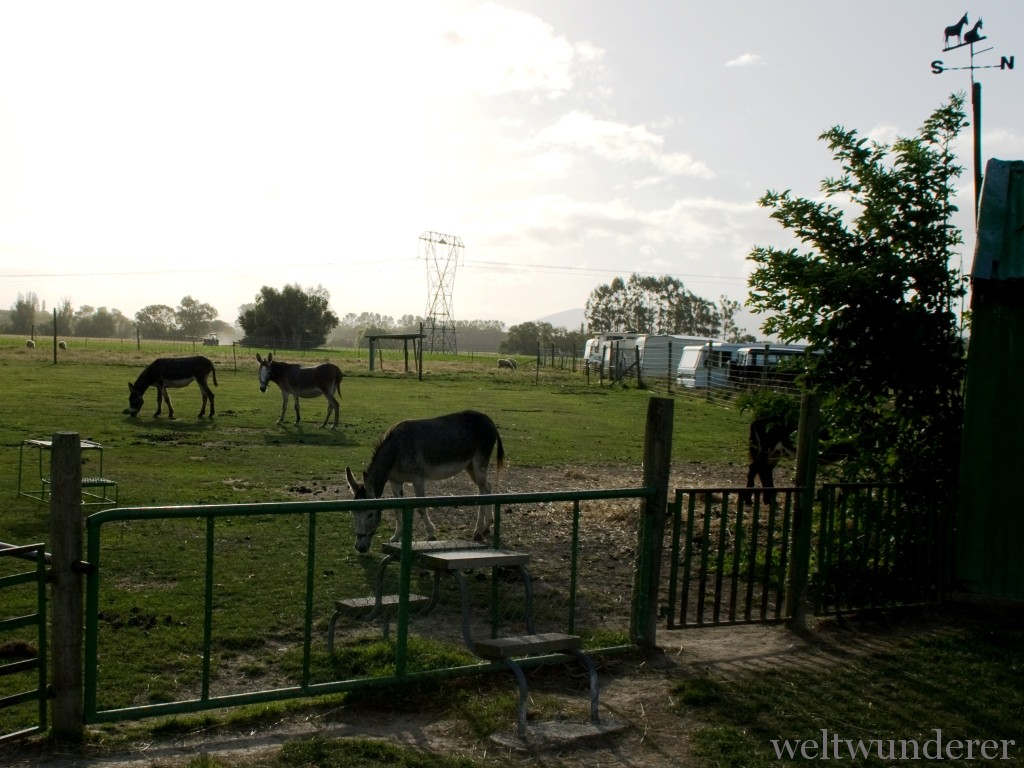 Donkeys Farmyard Holiday Park Geraldine