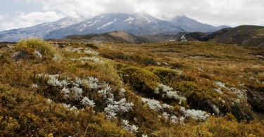Tongariro National Park mit Kindern Mt Ruapehu