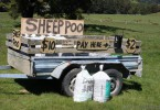 Sheep Poo New Zealand