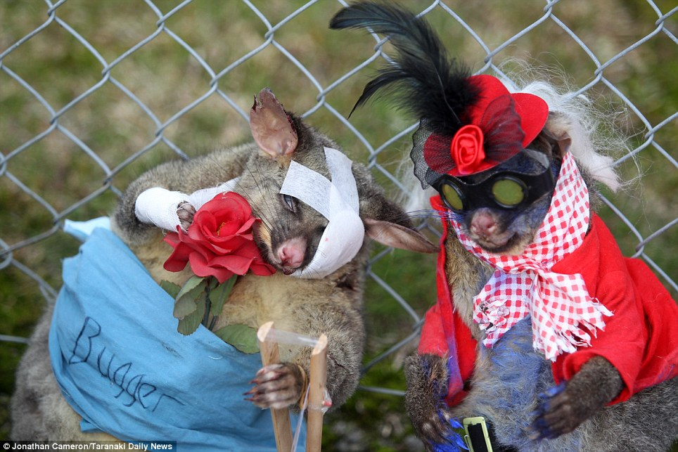 best-dressed-dead-possum (c) Jonathan Cameron/Taranaki Daily News