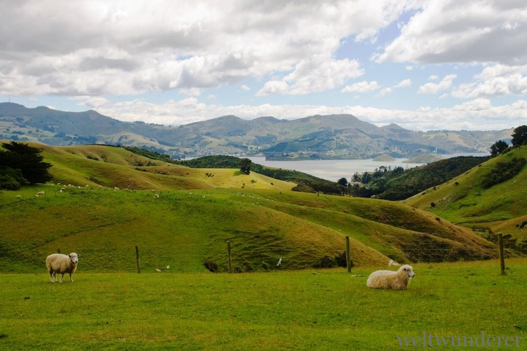 Farmland on Otago Peninsula