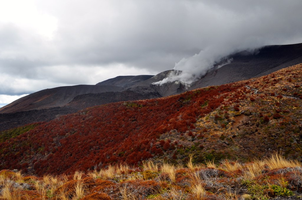 Dampfender Mount Tongariro - ganz normal in NZ (c) FlickR/Madeleine_H