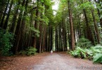 Off the beaten track mit Kindern: der Rotorua Redwoods Forest 2