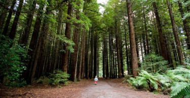 Off the beaten track mit Kindern: der Rotorua Redwoods Forest 4