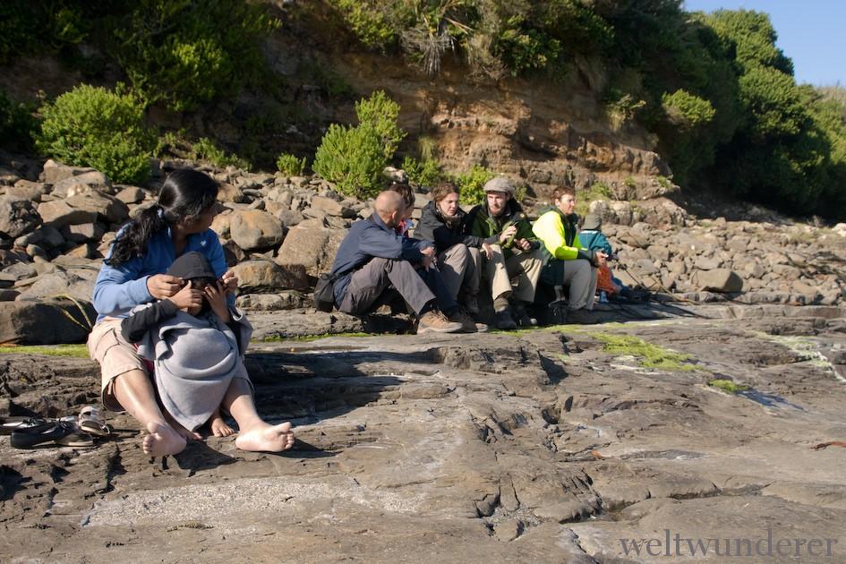 Weltwunderer Curio Bay Penguins