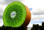 Weltwunderer Kiwi New Zealand