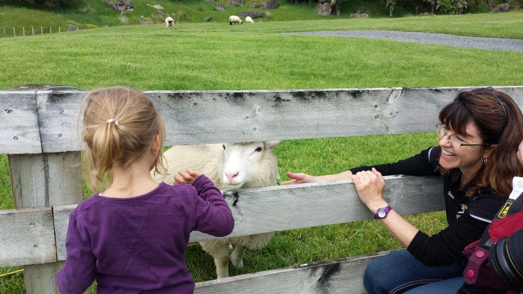 Lina, Polly das Schaf und Suzie