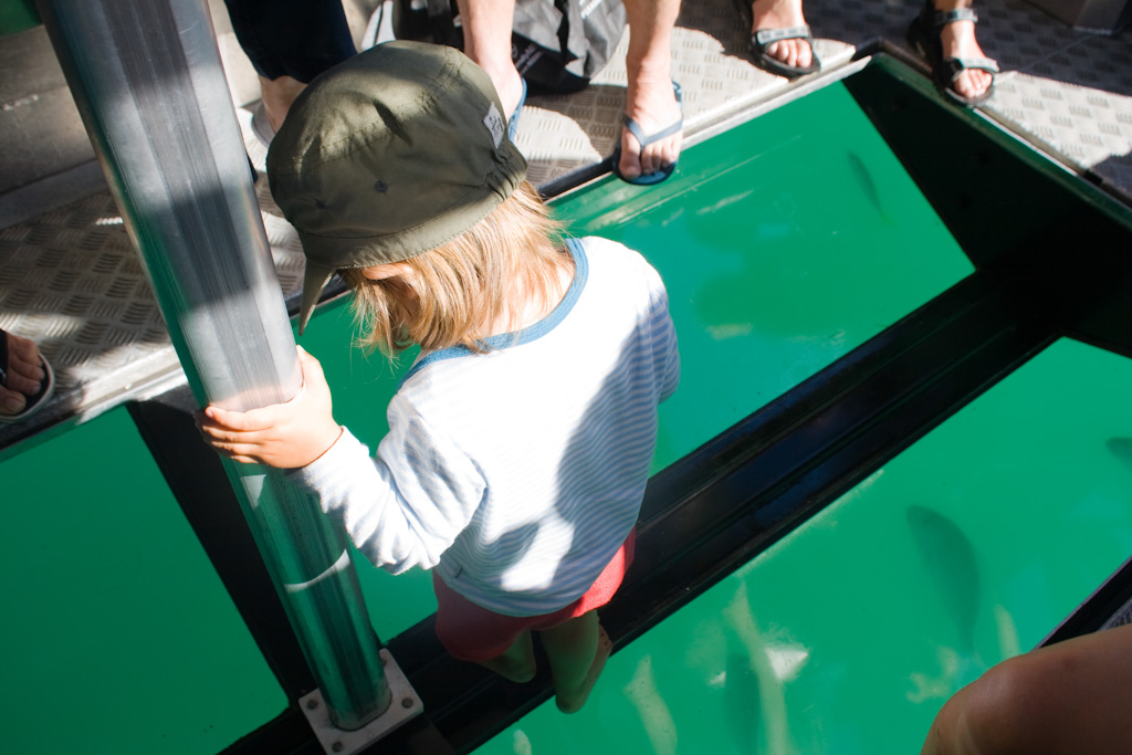 Glass Bottom Boat Tour in Whitianga - spannend!