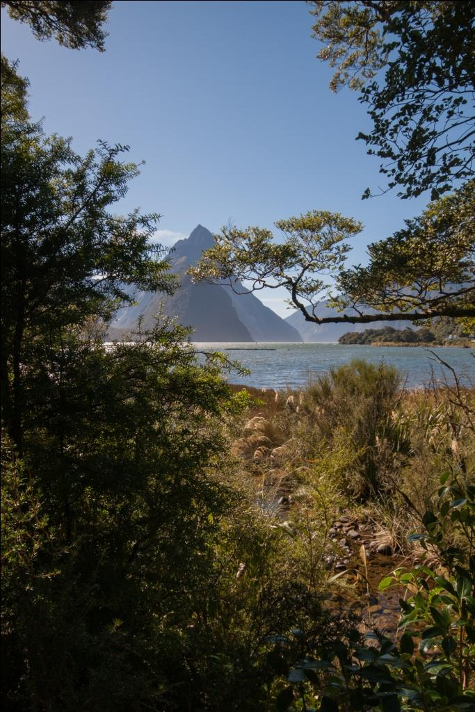 Milford Sound Road Trip