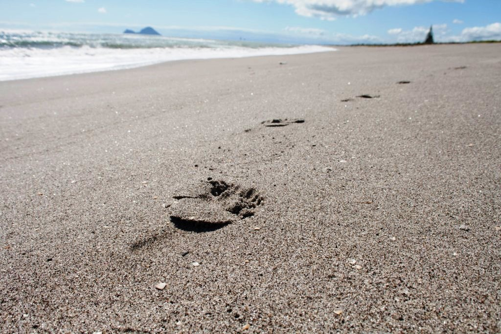 Freedom Camping Neuseeland Strand Fußabdrücke Matata