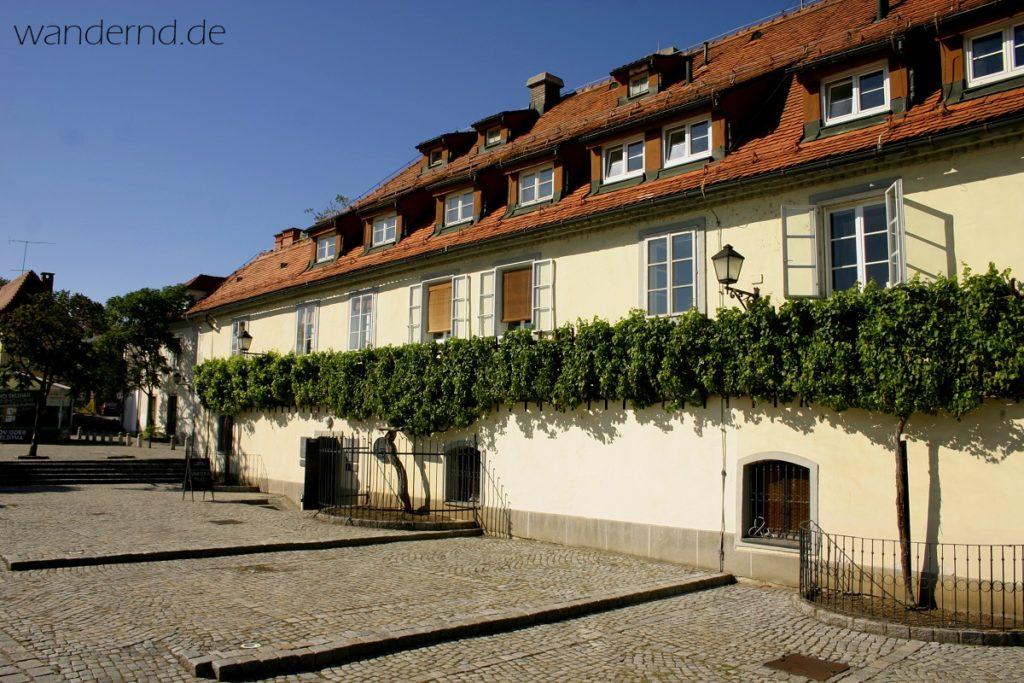 Slowenien Maribor Alte Rebe