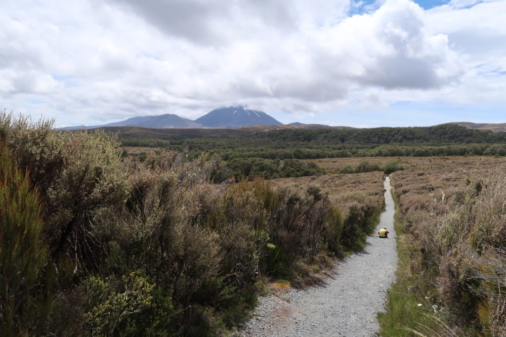 Mietwagen oder Camper in Neuseeland